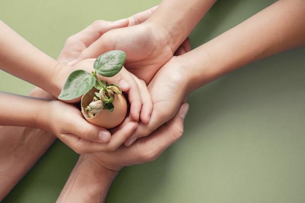 Hände halten sämling in eierschalen, montessori-ausbildung, csr corporate social responsibility,
