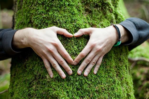 Hände in form von herzen auf einem baum