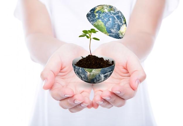 Hände mit einer welt und einer pflanze