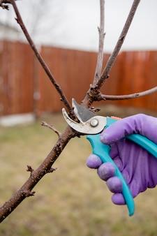 Hände mit gartenschere, die bäume im frühjahr beschneiden