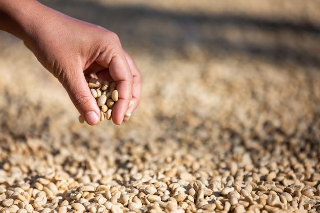 Hände mit kaffeebohnen auf kaffeebohnen, die getrocknet werden