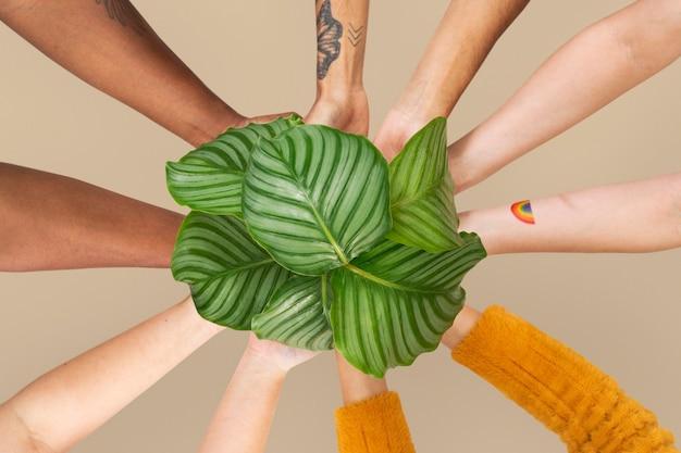 Hände schröpfen pflanze retten die umwelt kampagne