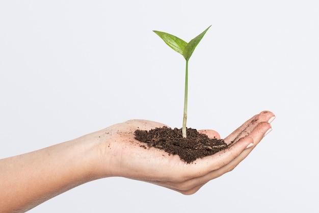 Hände schröpfen pflanzengeschäftsinvestition