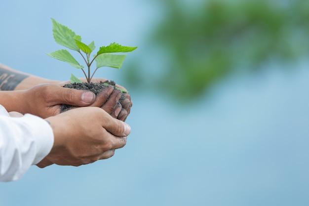 Hände von bäumen, die sämlinge wachsen lassen.