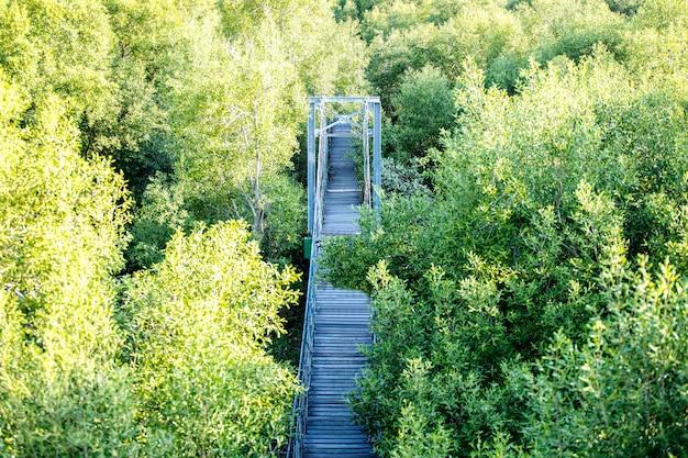 Hängebrücke im grünen wald, knall-pu-erholungsstätte, provinz samut prakan, thailand