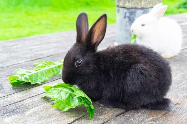 Häschen im freien. kleines, süßes schwarzes kaninchen sitzen auf holztisch und essen blatt im garten.