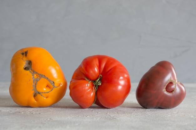 Hässliche organische bunte tomaten,