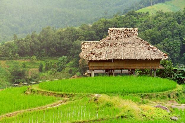 Häuschen in den reisfeldern am asiaten, hütte von asien-art