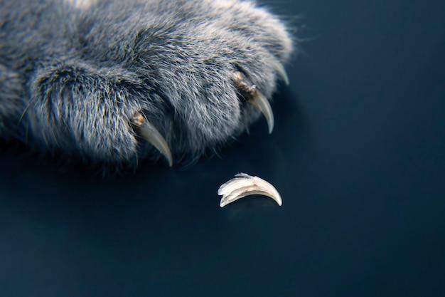 Häuten und ersetzen der krallen der katzenpfoten