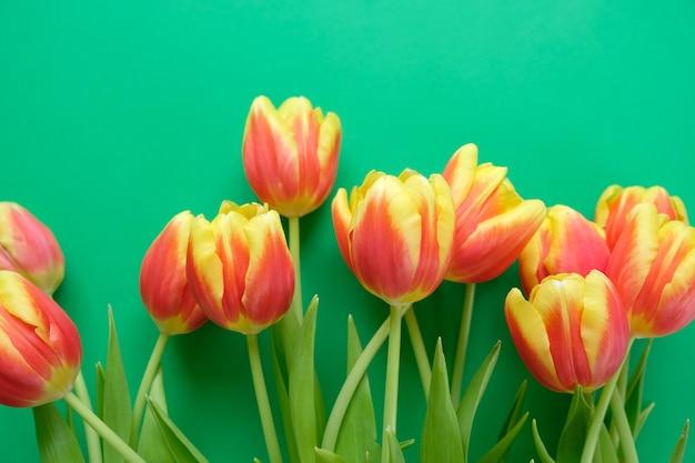 Hallo, frühling mit frischen gelb-roten tulpen auf dunkelgrünem hintergrund. konzept des internationalen frauentags, muttertags, ostern