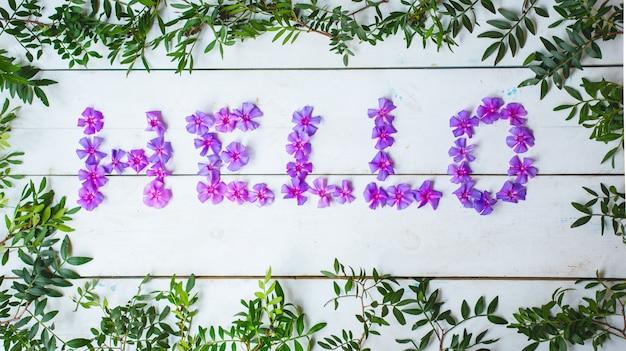 Hallo wort geschrieben mit violetten gänseblümchen und blättern.