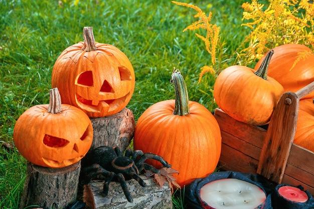 Halloween. jack-o-laterne. unheimlicher kürbis mit einem lächeln nahe kerzen und spinne im grünen wald, im freien. dekoration.