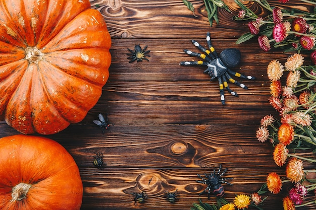 Halloween-konzept mit frischen kürbissen, spinnen und käfern mit blumen. süßes oder saures ansicht von oben