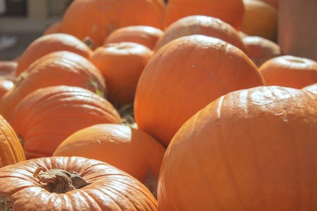 Halloween kürbis jack-o-laterne