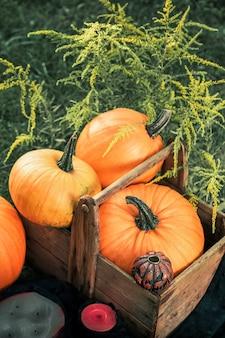 Halloween. kürbise in einem kasten nahe jack-o-laterne und kerzen im grünen wald, im freien. dekoration. getönten foto. ansicht von oben. erntedankfest