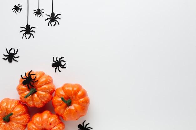 Halloween-kürbise und -spinnen mit kopienraum