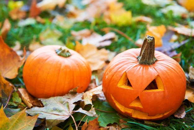 Halloween-kürbisse im herbstwald