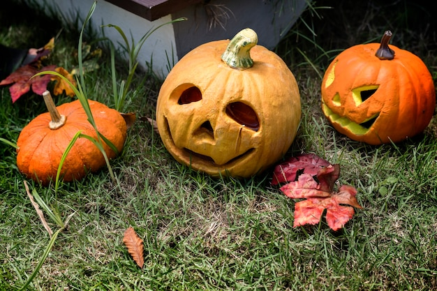 Halloween kürbisse und dekorationen im hinterhof