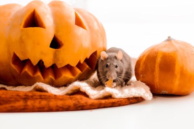 Halloween ratte und kürbis ratte und kürbis für halloween graue deko ratte herbstfarben