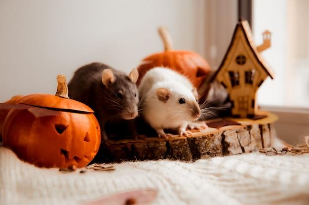 Halloween zwei ratten und kürbis ratten und kürbis für halloween dekorative ratte herbstfarben