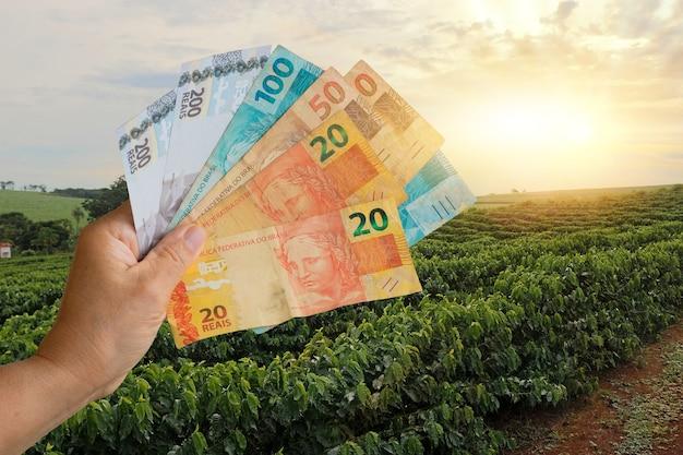 Halten des brasilianischen geldes auf dem plantagenfeld der kaffeefarm bei sonnenuntergang. konzeptbild der agrarwirtschaft.
