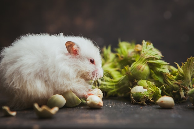 Hamster, der haselnuss auf einem dunklen braun isst. horizontal