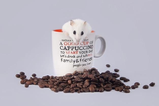 Hamster schaut aus einer tasse kaffee