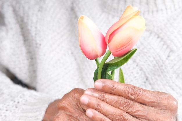 Hand der älteren frauen, die tulpenblume nah oben halten