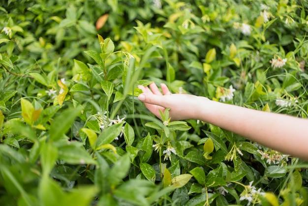 Hand der dame, die grünes gras berührt