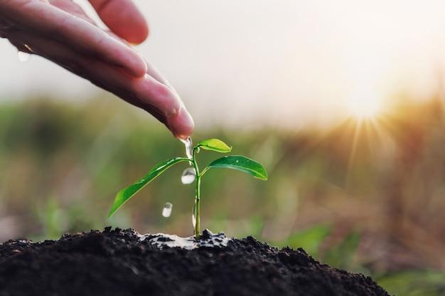 Hand des gärtners, der wasser am jungen baum zum pflanzen gießt. öko-umweltkonzept