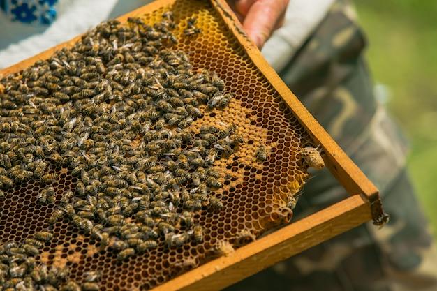 Hand des imkers arbeitet mit bienen und bienenstöcken am bienenhaus. bienen auf waben. rahmen eines bienenstocks. bienenzucht. honig.