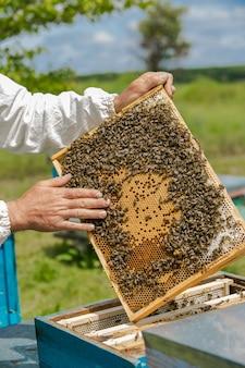 Hand des imkers arbeitet mit bienen und bienenstöcken am bienenhaus. bienen auf waben. rahmen eines bienenstocks