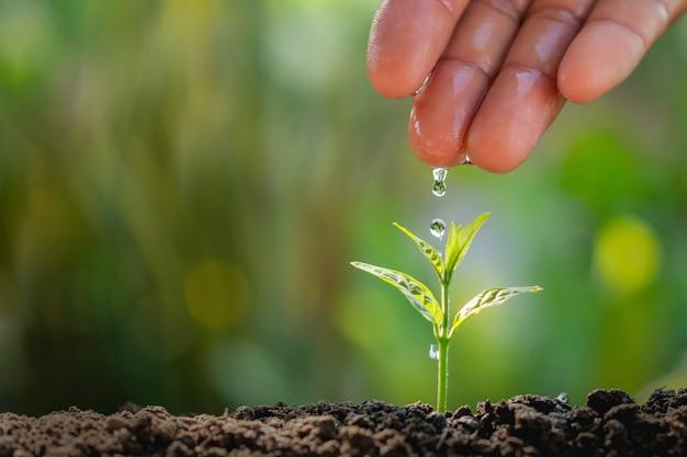 Hand des landwirts wässernd zur kleinen anlage im gartenhintergrund