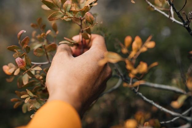 Hand des männlichen wanderers, die den baumast hält