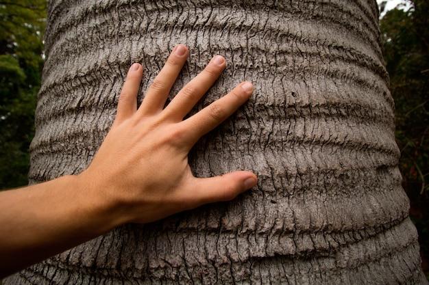 Hand des mannes, die stamm des baums berührt
