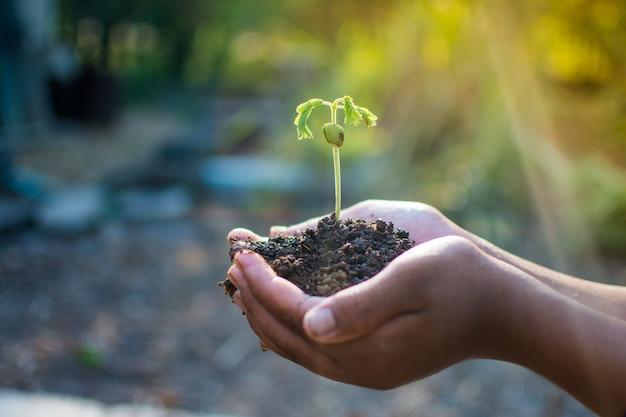 Hand, die anlage hält und das welt- und weltumwelttagkonzept am sonnigen tag sichert.