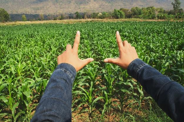 Hand, die ansichts-maisfeld gestaltet