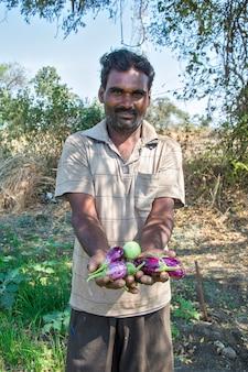 Hand, die aubergine an bio-auberginen oder auberginenfarm hält