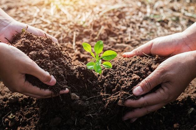 Hand, die baum im garten pflanzend hilft. öko-konzept