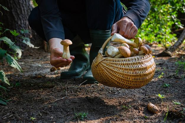 Hand, die boltetus edulis neben vollem weidenkorb der pilze im wald hält.