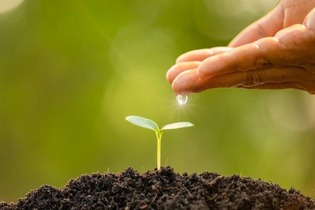 Hand, die dem jungen grünen spross, der im boden auf grüner naturunschärfe wächst, wasser gibt