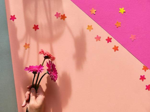 Hand, die drei gerbera-gänseblümchenblumen auf zweifarbigem geometrischem papierhintergrund hält