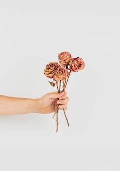 Hand, die ein bündel getrocknete rosen hält
