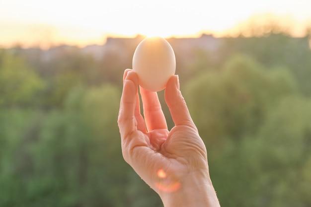 Hand, die ein weißes ei anhält