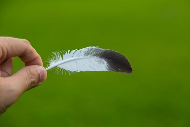 Hand, die eine feder vor grünem natürlichem hintergrund hält