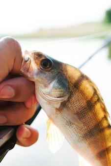 Hand, die gefangene fische im haken hält