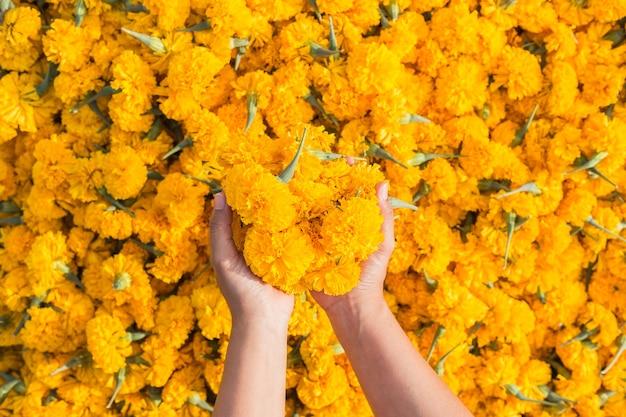 Hand, die gelbe ringelblumenblumen und stapel des blumenhintergrundes hält