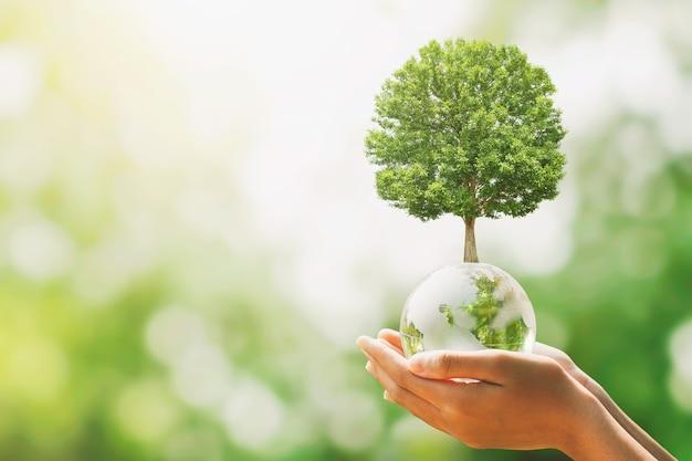 Hand, die glaskugelkugel mit baumwachstum und grünem naturunschärfehintergrund hält. öko-konzept