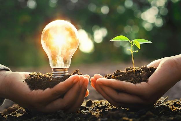 Hand, die glühlampe mit kleinem baum und sonnenschein hält. energiekonzept in der natur