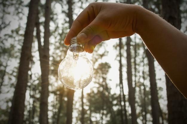 Hand, die glühlampe mit sonnenlicht im wald hält. solarenergie, sauberes stromkonzept